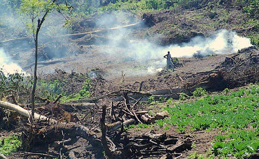 Deforestation Major Cause Of Land Degradation In Kinango