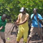 Mangrove Kilifi