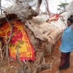Voi woman hollow tree